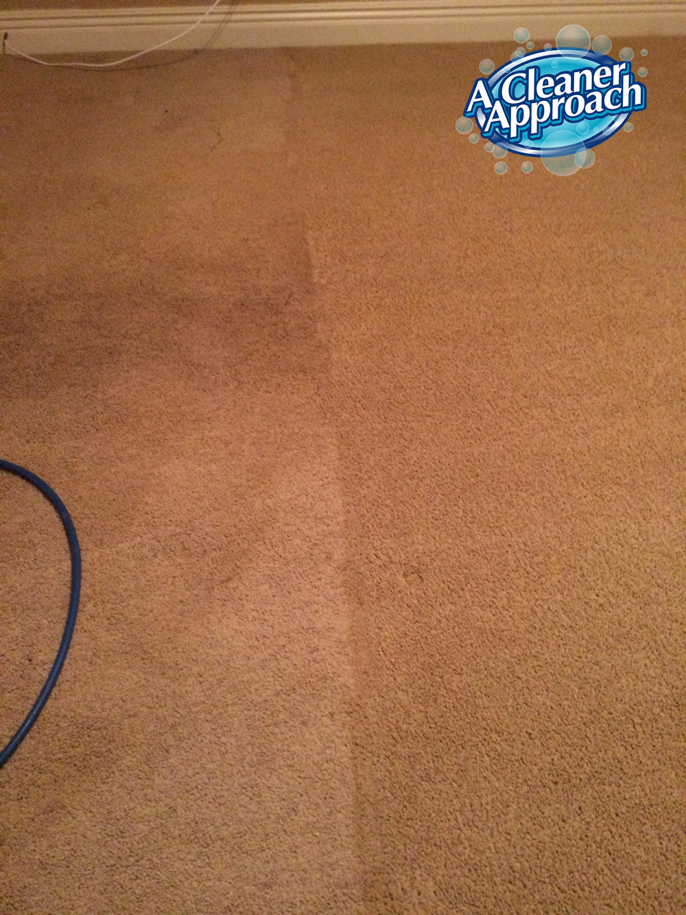 Carpet & Area Rug Cleaning 7